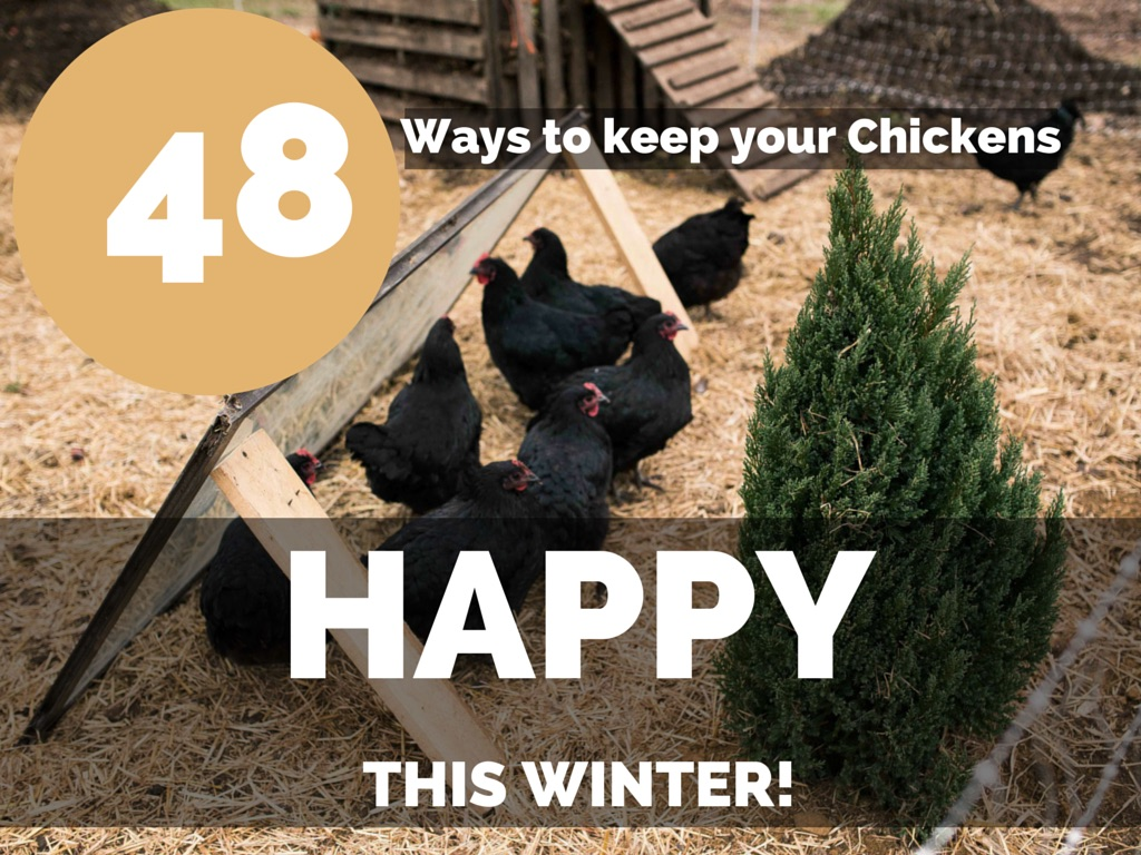 48 Ways to Keep Your Chickens Happy this Winter!