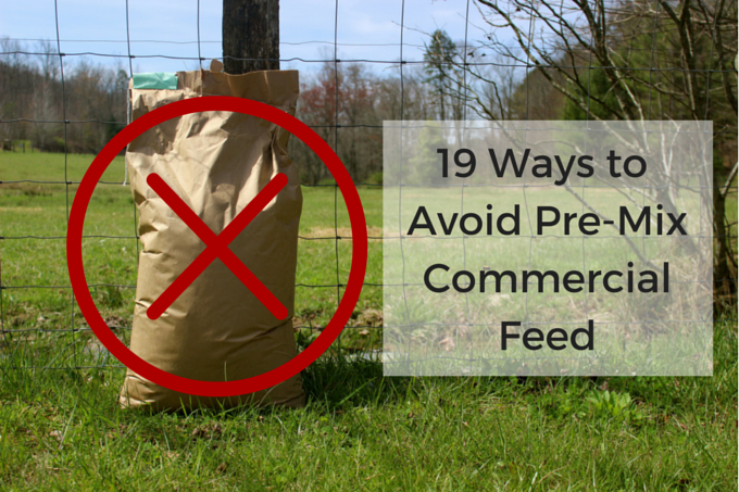 19 Ways to Feed Chickens Other Than