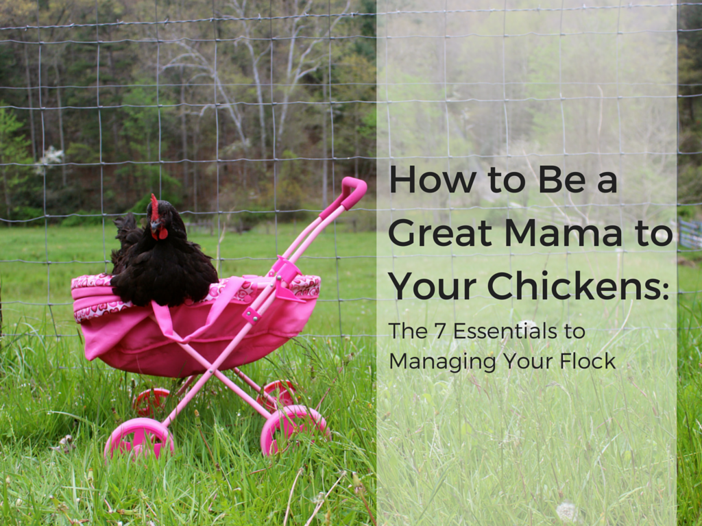 How to Be a Great Mama to Your Chickens: The 7 Essentials for Managing Your Flock