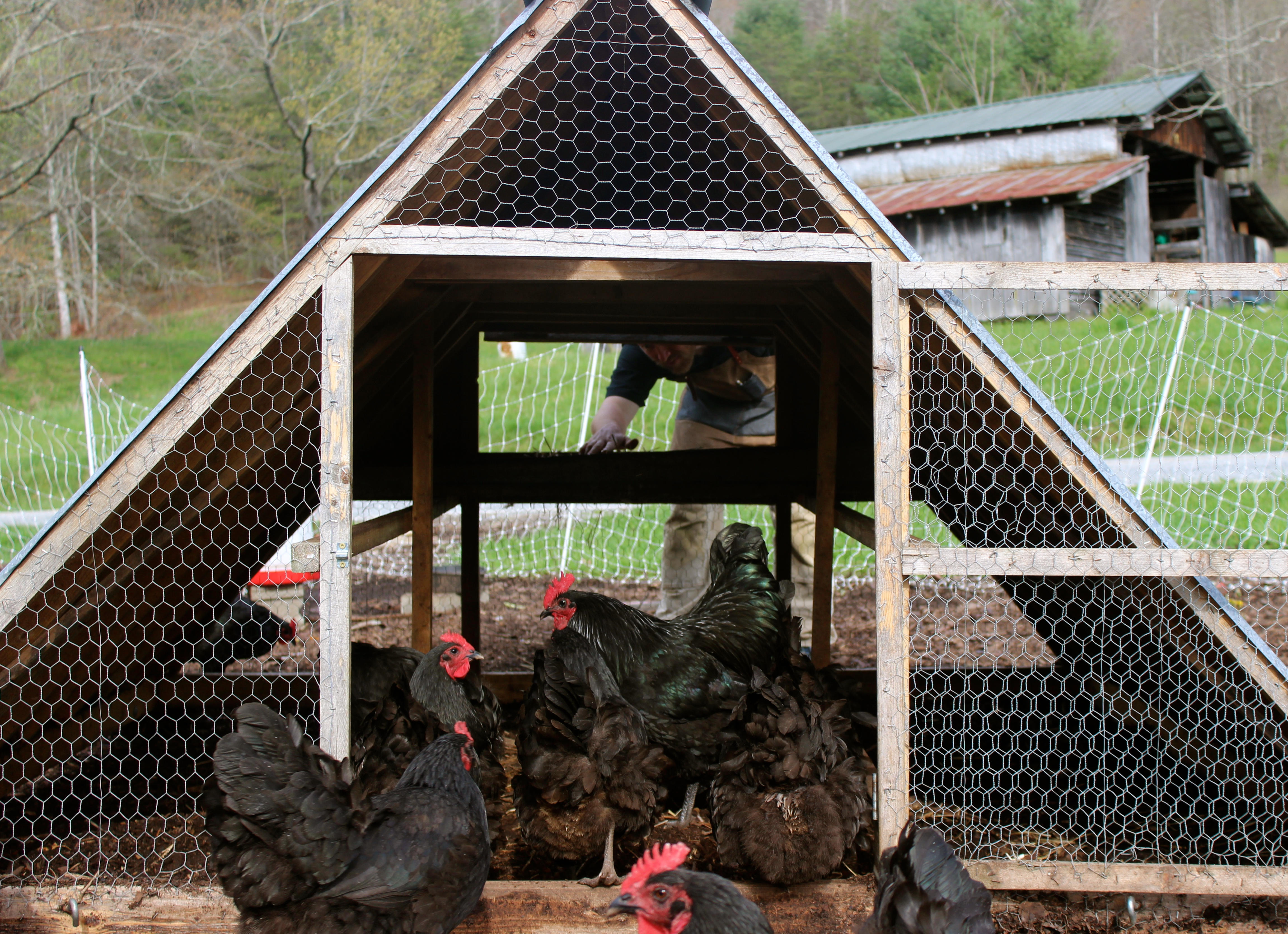 Chicken Coops That Work 5 Brilliant Ways Abundant