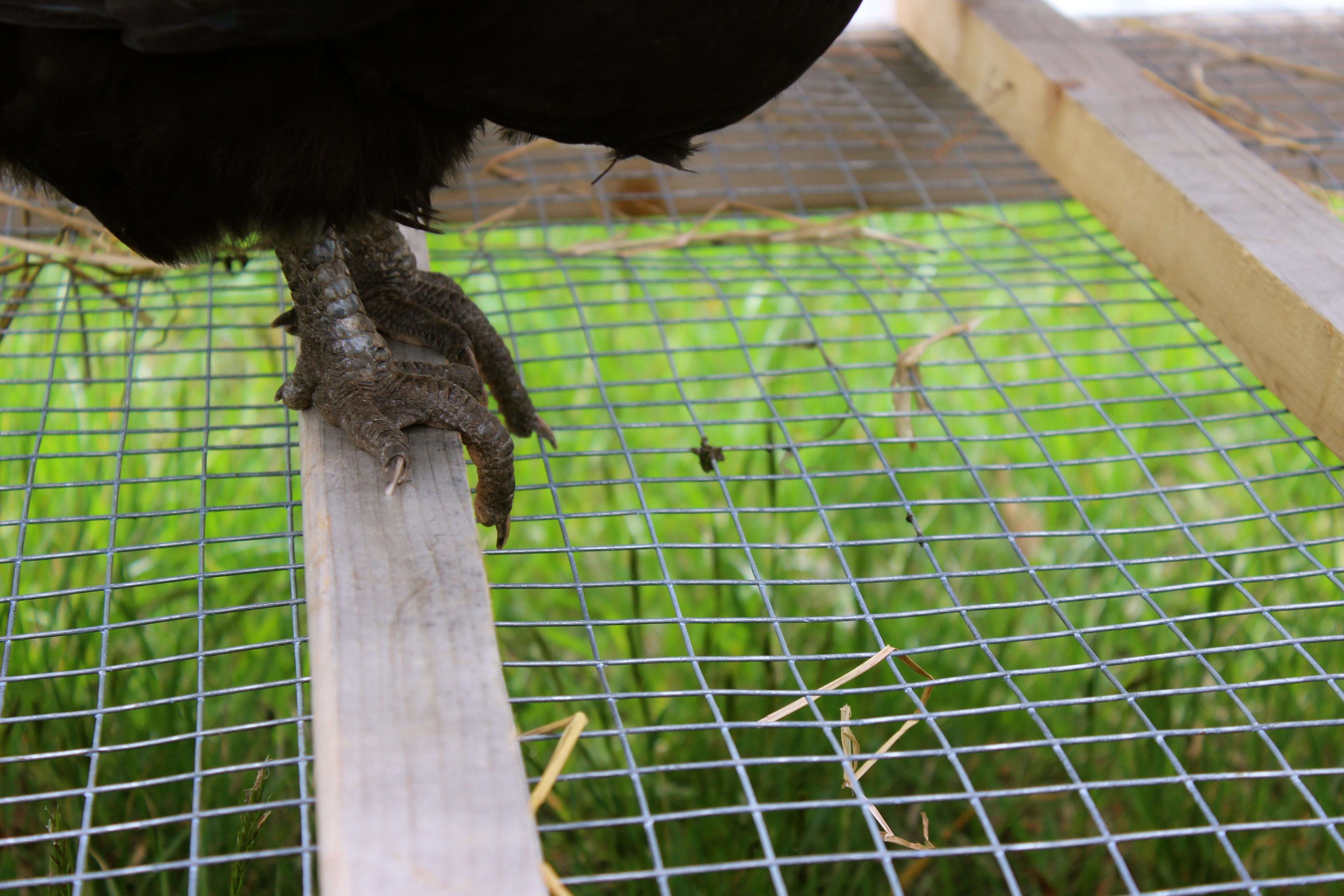 Good House Plant Chicken Coops That Work 5 Brilliant Ways Abundant