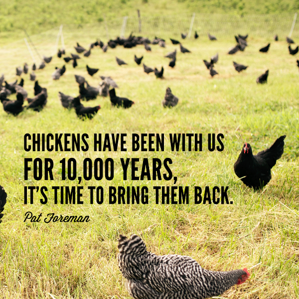 7 Essentials For Keeping Your Chicken Flock Alive And Happy Abundant Permaculture
