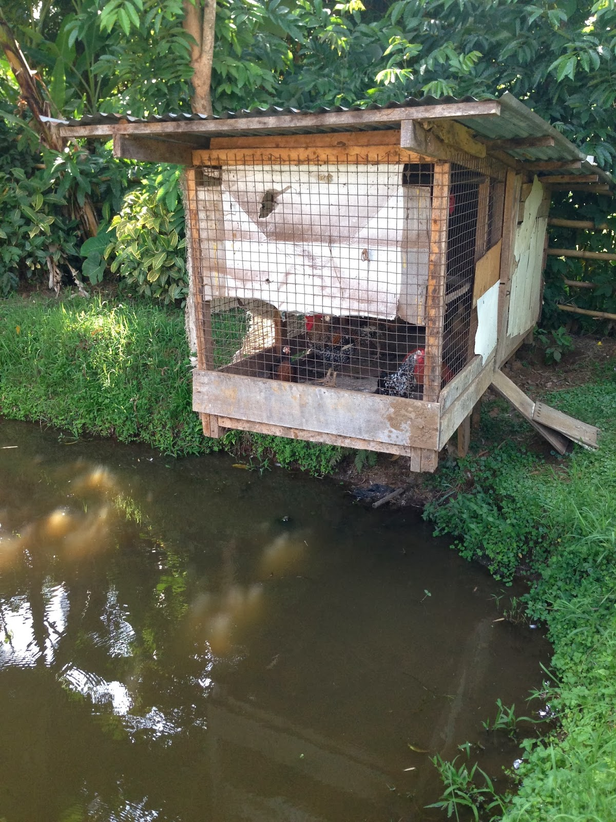 Chicken Coops That Work: 5 Brilliant Ways - Abundant ...