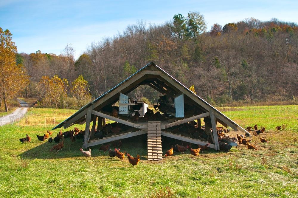 Chicken Coops That Work 5 Brilliant Ways Abundant
