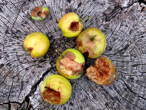 rottingfruit