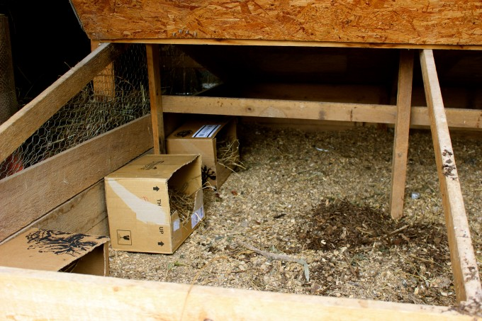 I converted an old brooder box (for chicks) to a broody box for hens.