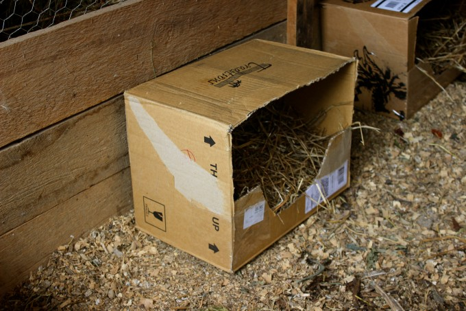 "Place the box in your ""maternity"" area. This is an old brooder box for chicks."