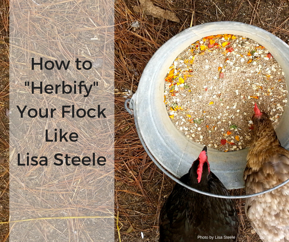 "How to ""Herbify"" Your Chickens Like Lisa Steele"