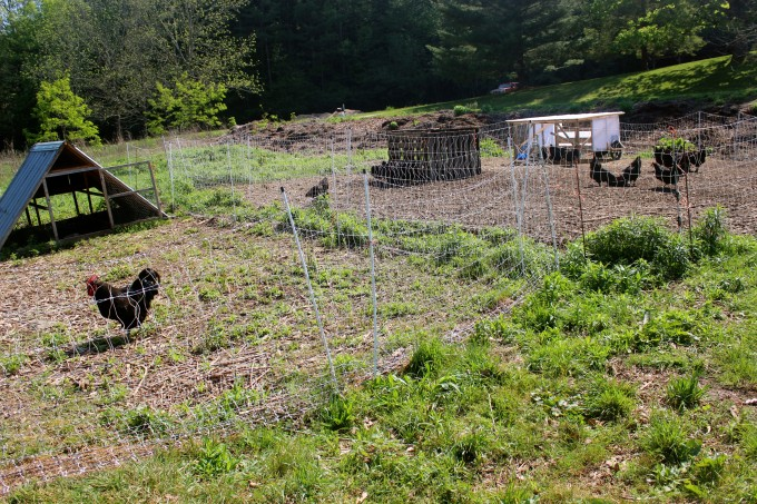 Set up a complete accommodation separate from the rest of your flock.