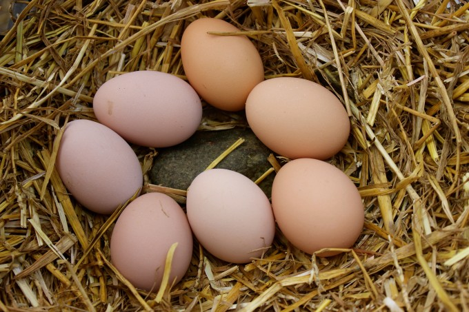 Anything egg-like will work great as fake eggs to encourage brooding.