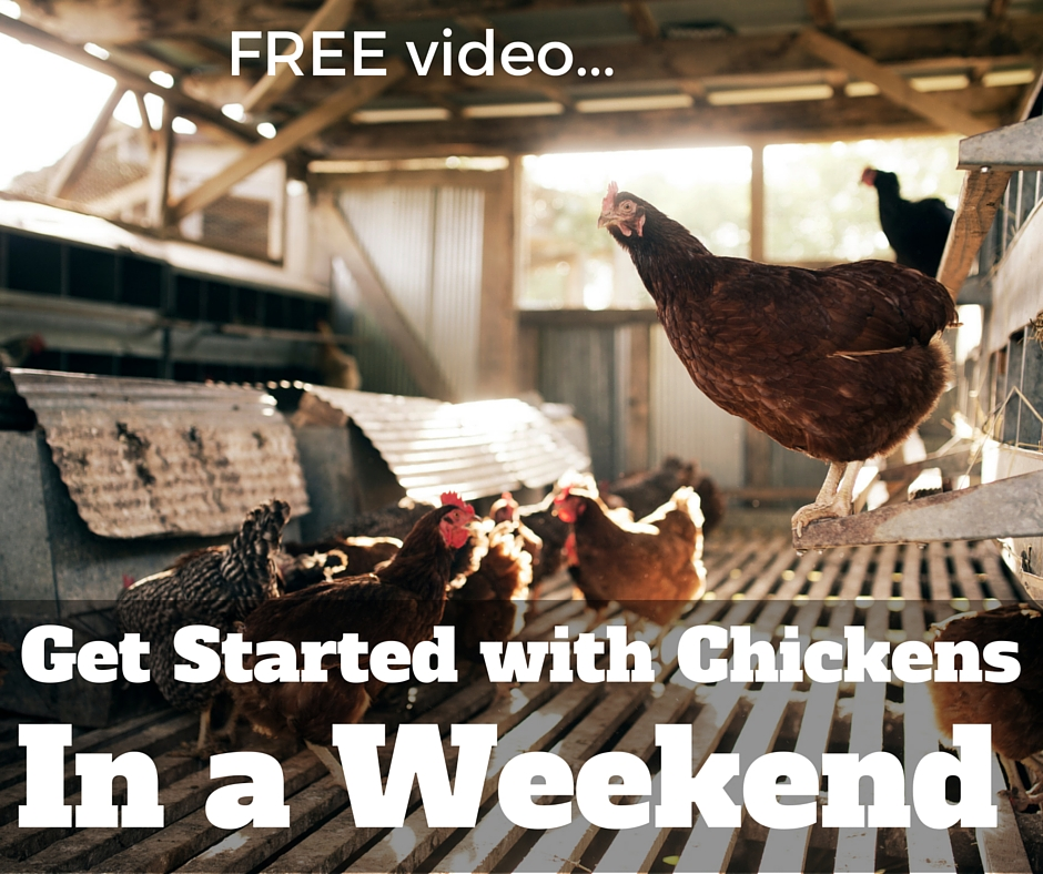 [Video] Getting Started with Chickens – In One Weekend