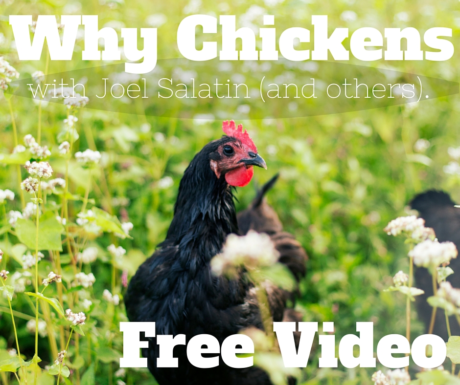 [Video] Why Chickens – With Joel Salatin (and friends).