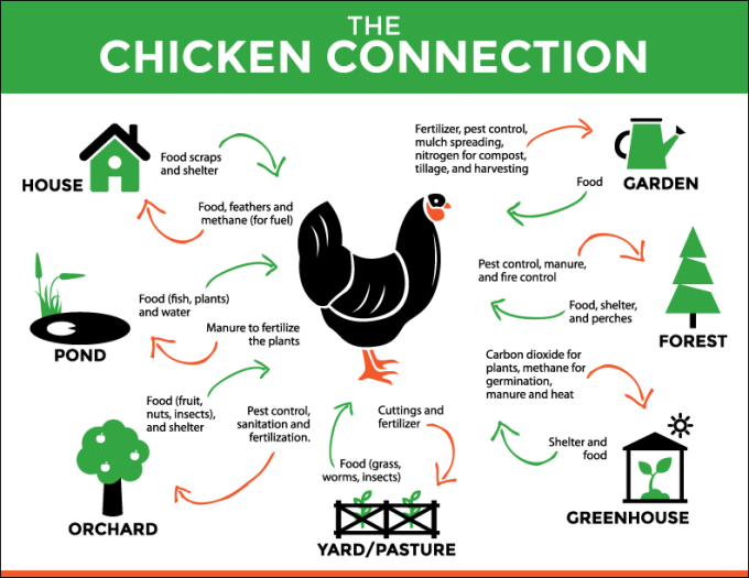 Get More Out Of Your Chickens With Less Work Nine Crazy Simple