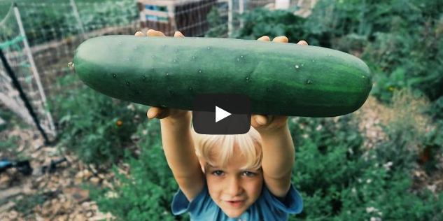 Day 89: Six Year Old Eats a 2 LB Cucumber (In A Day)!