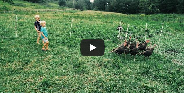 Day 91: Turkeys Gobble – On Demand!
